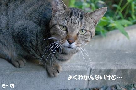 ryo (9)