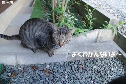 ryo (8)