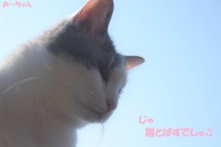 ryo (6)