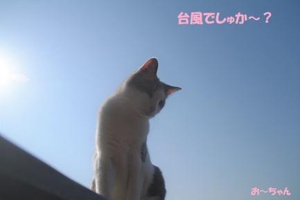 ryo (4)