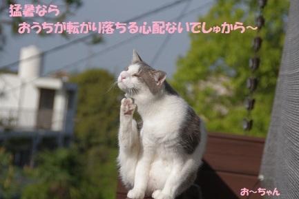 ryo (3)