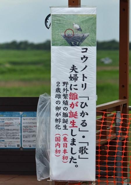 コウノトリのぼり旗 DSF_7228