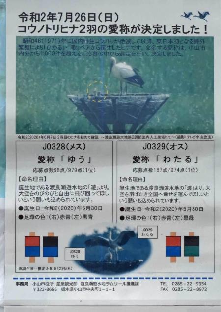 コウノトリ DSF_8330