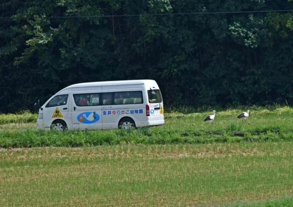 コウノトリ1子供とバス DTC_4