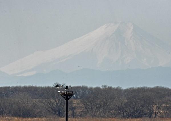 コウノトリ富士山 DTG_9680
