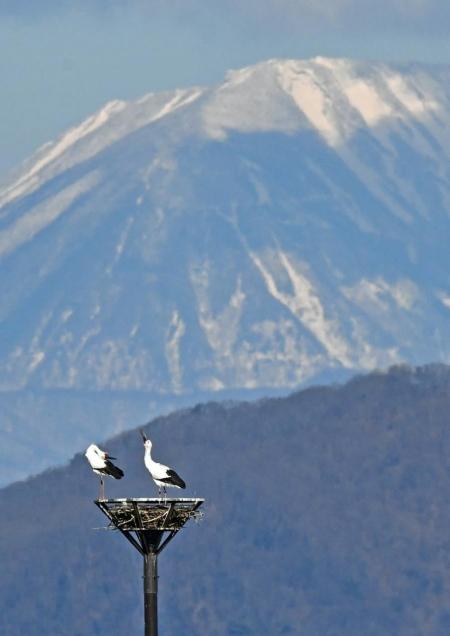 コウノトリ男体山 DTG_9710