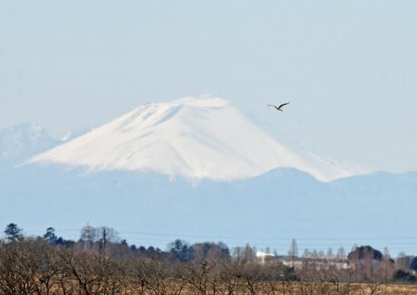 コウノトリ浅間山 DTF_2487