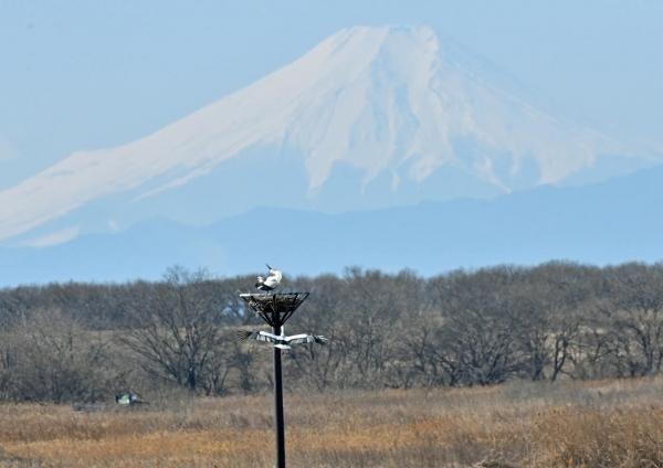 コウノトリ富士山 DTF_7295