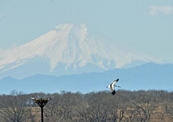 コウノトリ富士山 DTF_7503