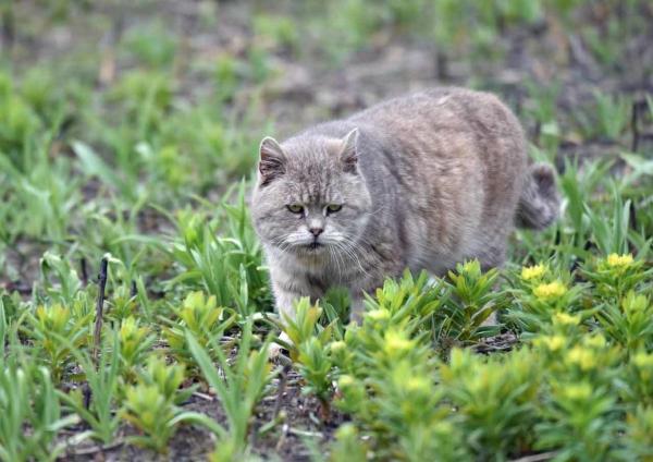 ノウルシと猫 DSF_9534