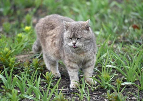 ノウルシと猫 DSF_9547