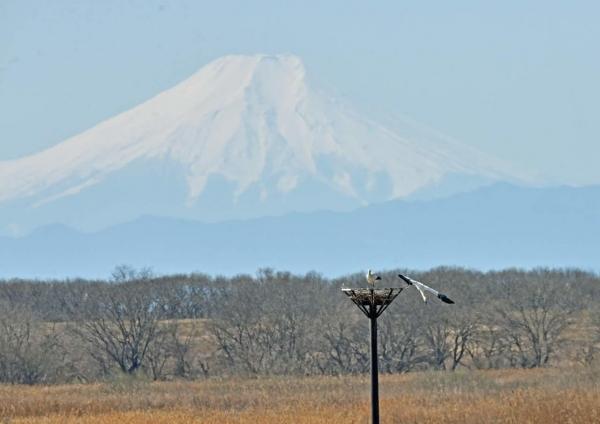 コウノトリ富士山2 DTF_3097
