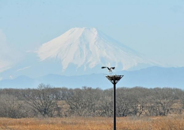 コウノトリ富士山3 DTF_7156