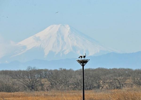 コウノトリ富士山4 DTF_7192