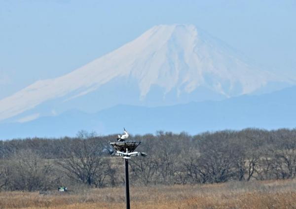 コウノトリ富士山5 DTF_7296