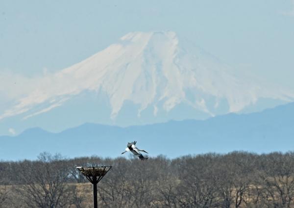 コウノトリ富士山6 DTF_7500