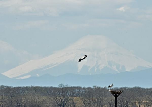 コウノトリ富士山 DTG_0179