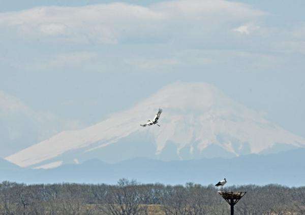 コウノトリ富士山 DTG_0180