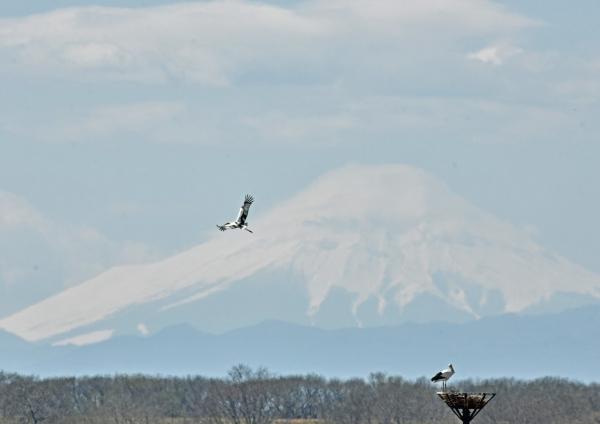 コウノトリ富士山 DTG_0182