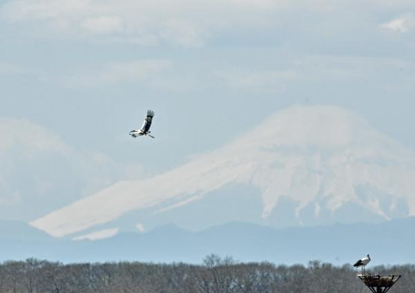 コウノトリ富士山 DTG_0183