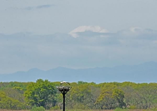 コウノトリ7富士山 DTG_6190