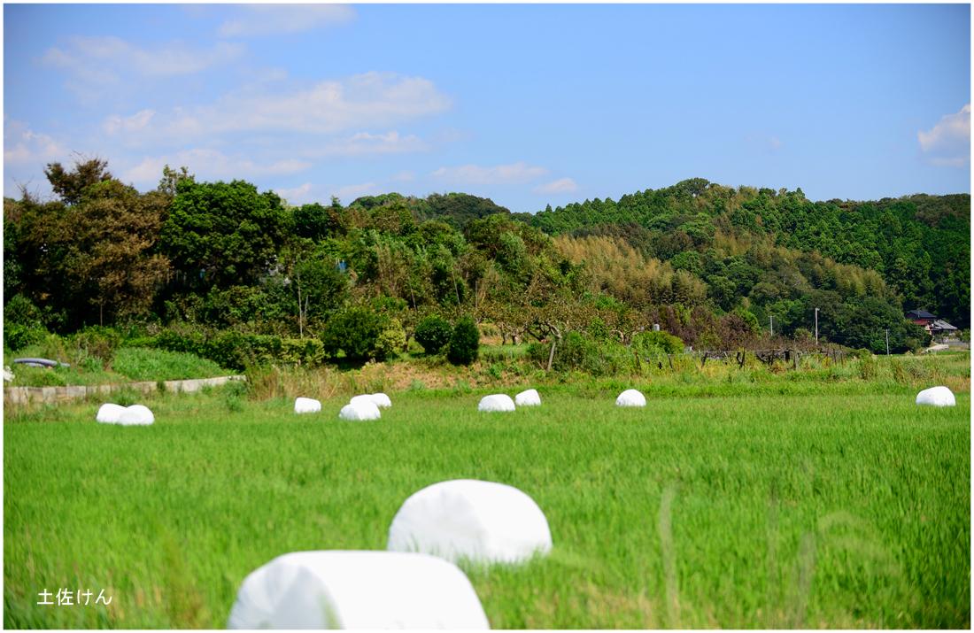 田園風景3