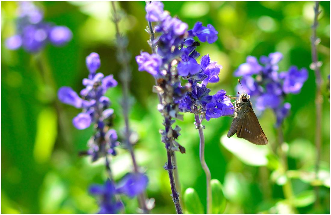 花と蝶・助手1