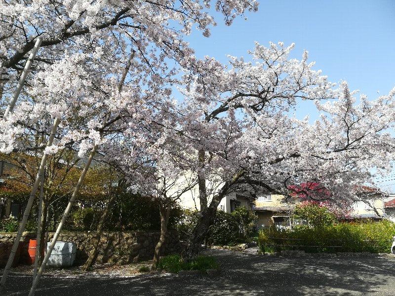 jouguujnjya2-tsuruga-021.jpg