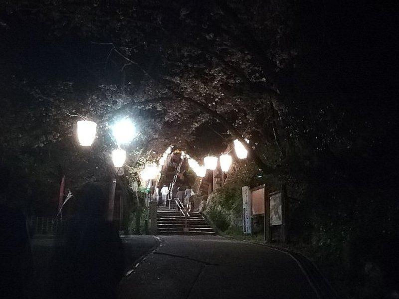 kanakasakigu7-tsuruga-002.jpg
