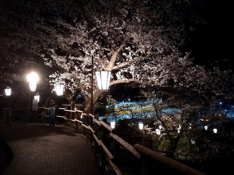 kanakasakigu7-tsuruga-042.jpg