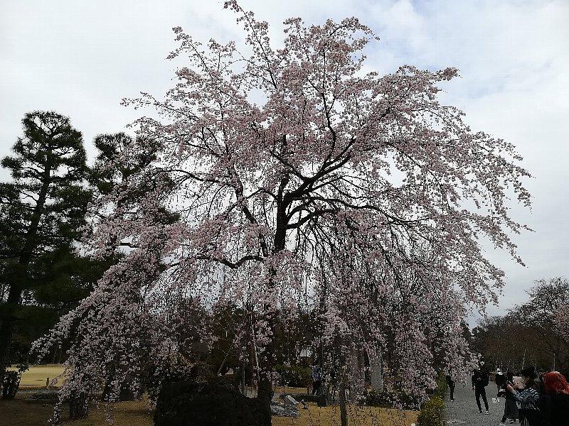 nijyojyo2-kyoto-115.jpg