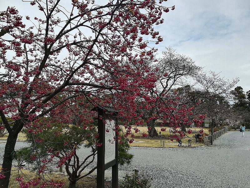 nijyojyo2-kyoto-127.jpg