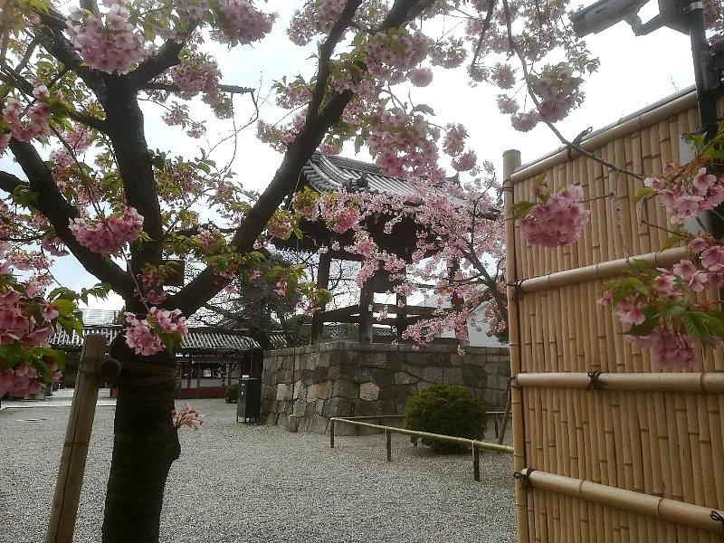 tohji-kyoto-053.jpg