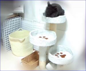 猫タワーでおやつ