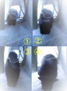 猫ドア 合成 (2)