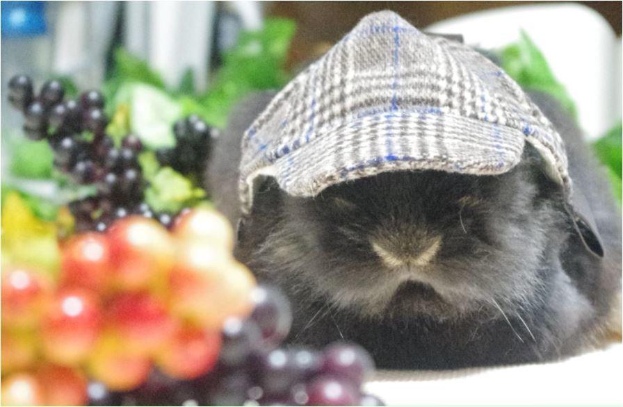 ぶどう チェックの帽子