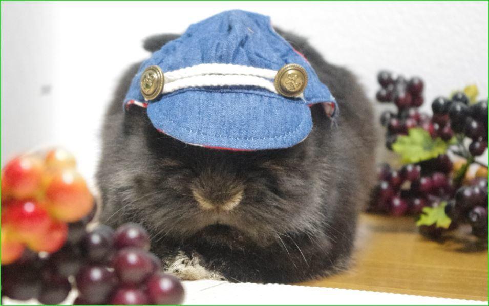 ぶどう デニム帽子