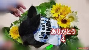 ありがとう トップ画 4