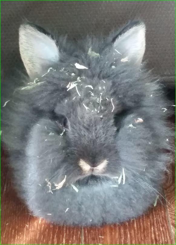 仔ウサギ2