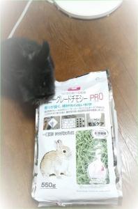 牧草 (2)