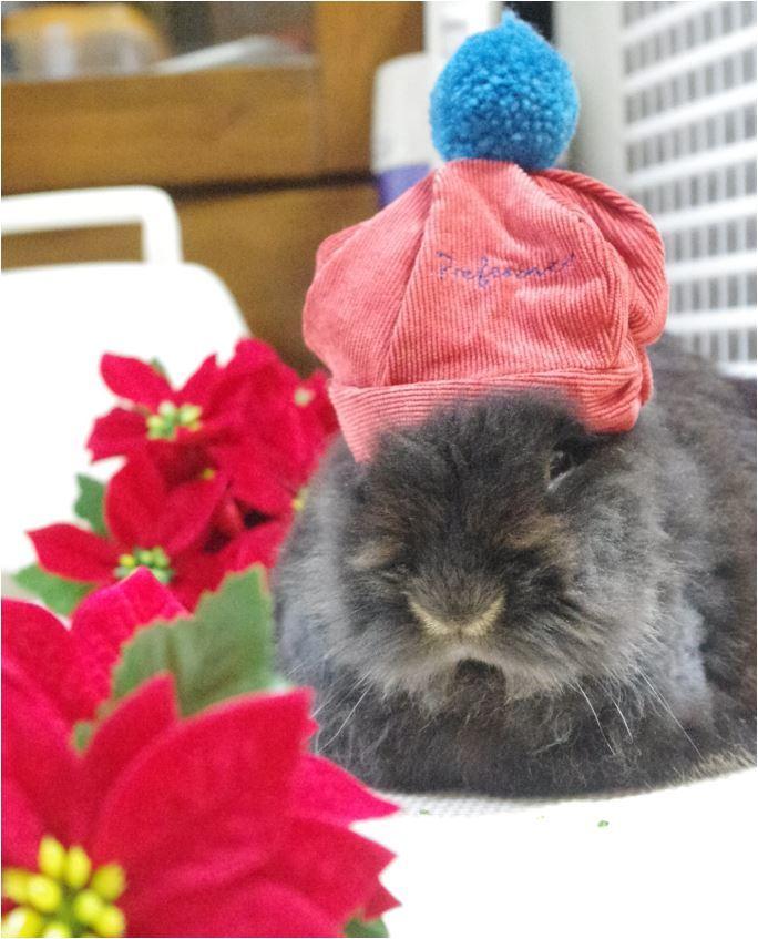 ポインセチア ニット帽 赤