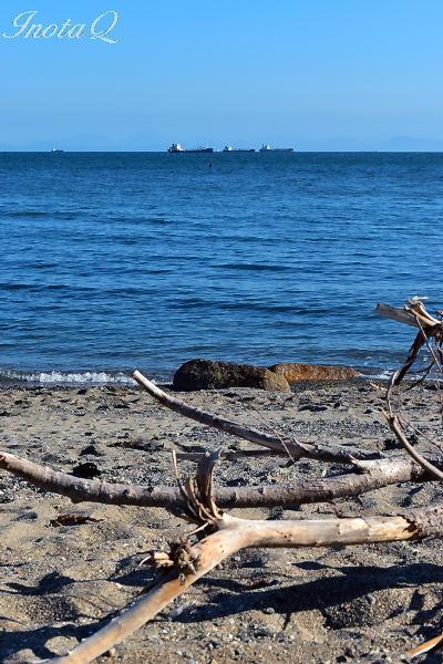 流木と海mini