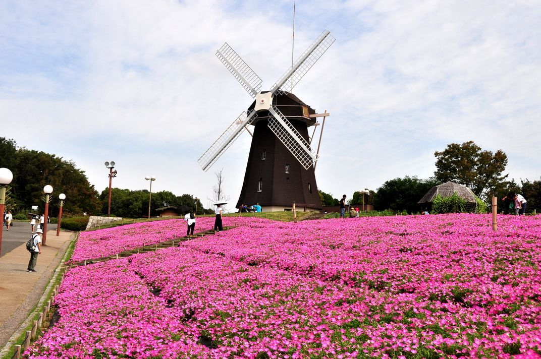 ⑧「花と風車」