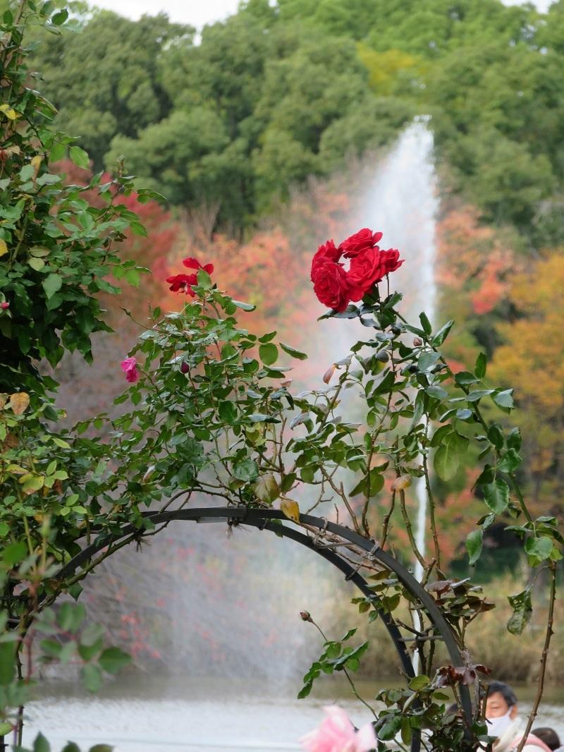 ②「紅葉と噴水バックに」
