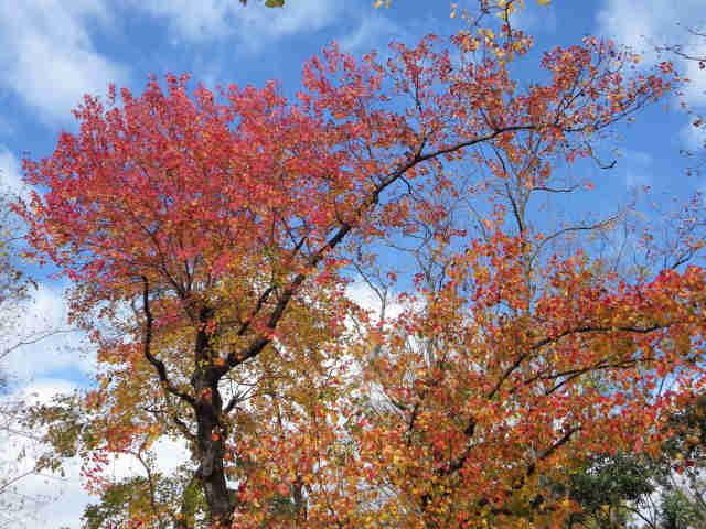④秋の日をあびて