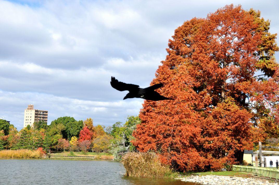⑨秋とカラス