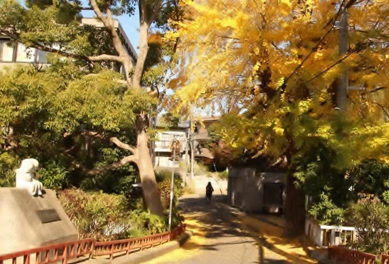 ②「銀杏の黄葉」