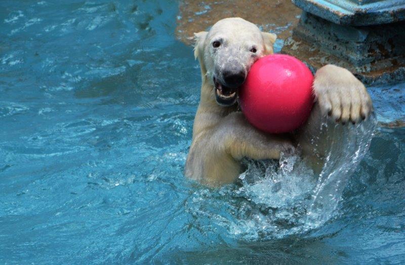 ④「ボール遊び」