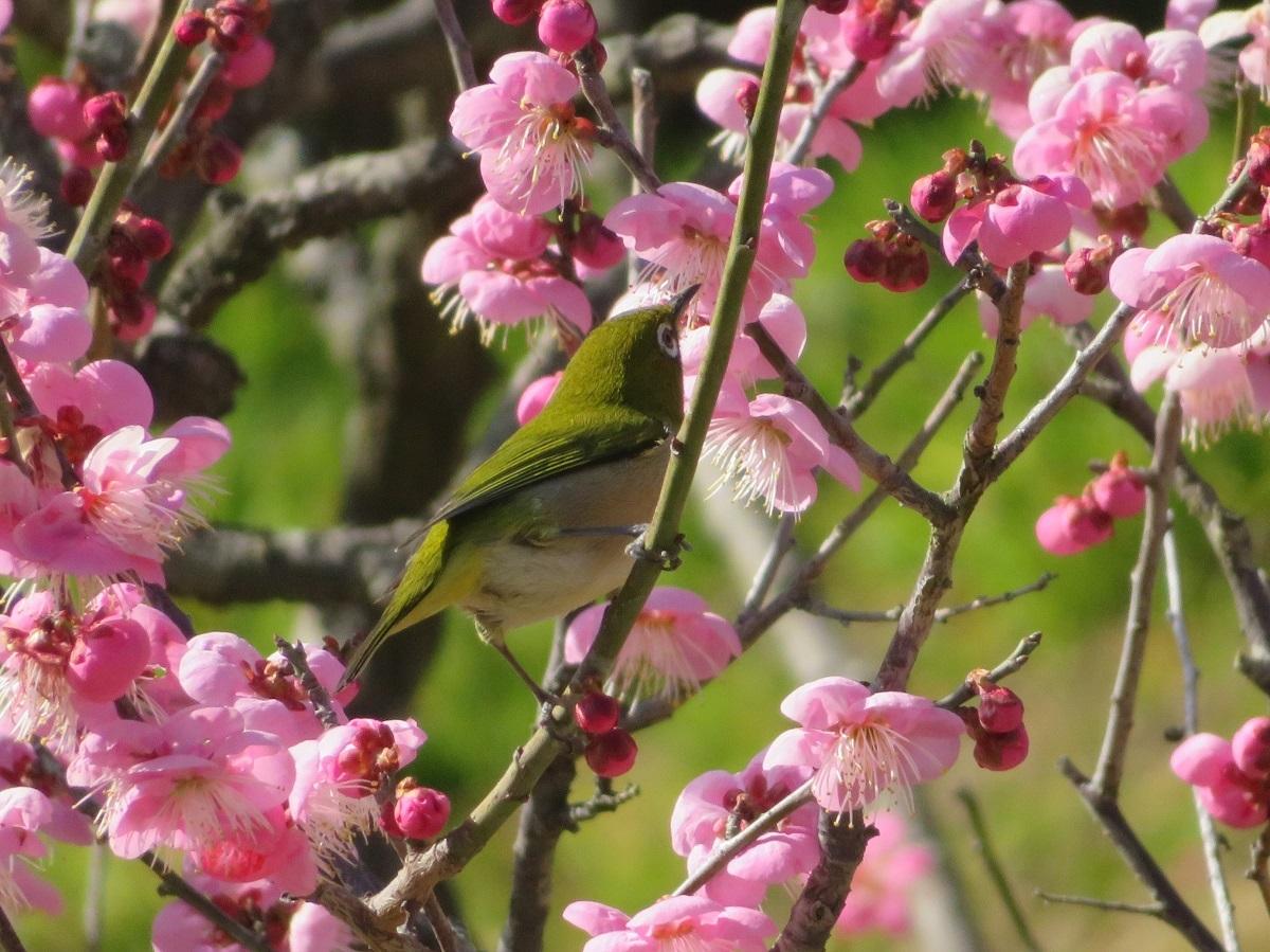 ⑫「春を謳歌」