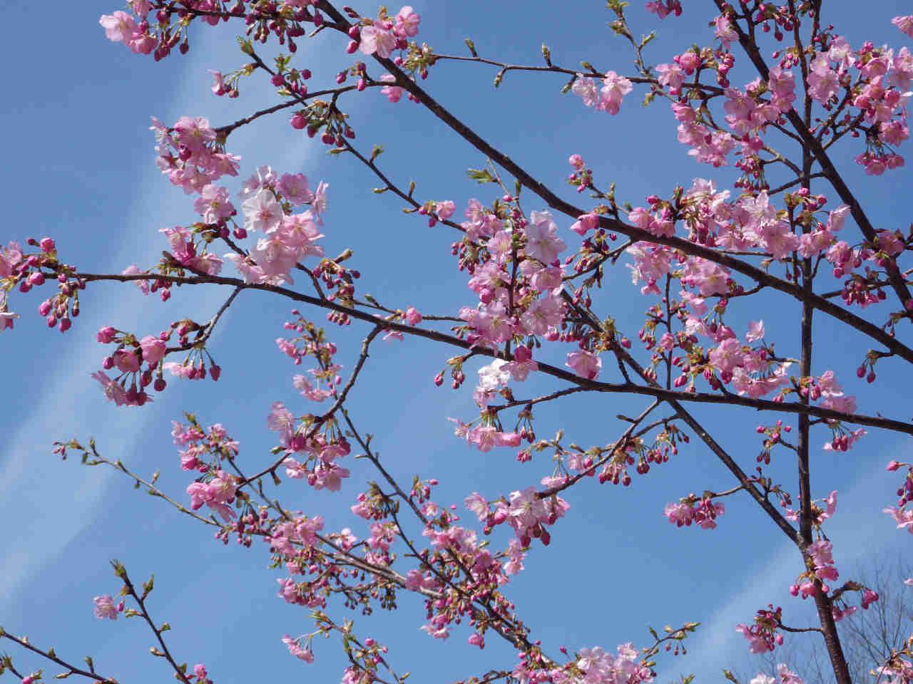 ⑤「春の訪れ」
